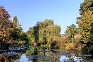 Seerosenteich in den Gärten von Monet in Giverny