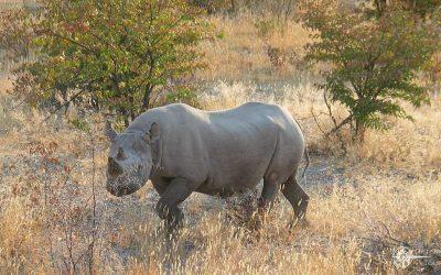 Große Zeltsafari durch ganz Namibia