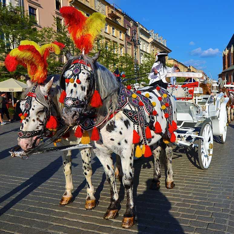 Festlich geschmücktes Pferdegespann in Krakau (Foto: Ralf Hollstein)